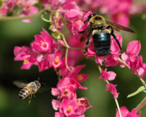 Beekeeping, live bee Removal Metairie, Kenner, River Ridge, St. Rose, Destrehan, La Place, Lutcher, Arabi, Chalmette